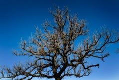 голубой яркий безлистный вал неба Стоковое Изображение RF