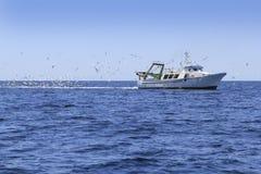 голубой fisherboat много чайок профессионала океана Стоковые Изображения RF