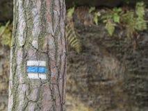 Голубой touristic знак следа метки на елевом лесе ствола дерева, утесе Стоковое Изображение RF