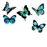 голубые бабочки Стоковое фото RF