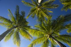 голубые валы неба ладони кокоса стоковая фотография