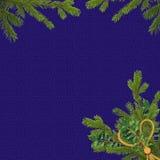 голубые ветви чешут спрус праздника Стоковые Фото