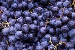 голубые виноградины Стоковое Изображение