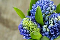 Голубые гиацинты Стоковое фото RF