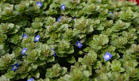 Голубые глазы младенца уроженец wildflower весны стоковые изображения