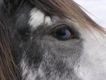 голубые глазы Стоковое фото RF