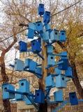 Голубые дома птицы на дереве Стоковые Изображения RF