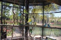 Голубые, зеленые и желтые милые красочные budgies в большой клетке на улиц стоковые фотографии rf