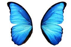 голубые крыла бабочки с слепыми пятнами белизна изолированная предпосылкой стоковая фотография rf