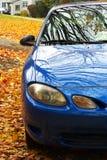 голубые листья автомобиля Стоковые Изображения RF