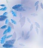 голубые листья рамки стоковая фотография