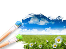 голубые маргаритки засевают небо травой одичалое Стоковые Фото