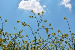 Голубые мир и цветок стоковое фото