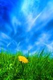 голубые небеса Стоковые Фото