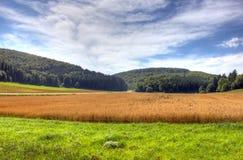 голубые облака field небо лужка Стоковое фото RF