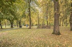 Голубые парк озера и листва осени стоковое изображение