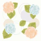 голубые померанцовые розы Стоковые Фото