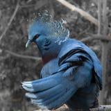 Голубые птицы Стоковые Изображения RF