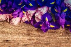 Голубые радужки и тюльпаны pik стоковые фотографии rf