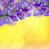 голубые радужки фантазии букета стоковое фото rf