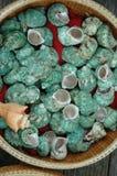 голубые раковины Стоковые Фотографии RF