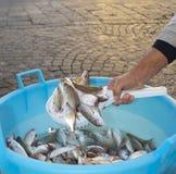 Голубые рыбы для продажи Стоковое Изображение