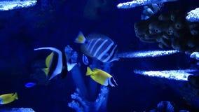 Голубые рыбы приключения в аквариуме видеоматериал
