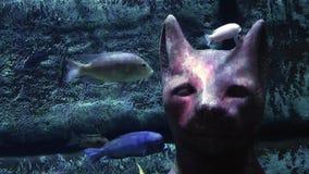 Голубые рыбы приключения в аквариуме акции видеоматериалы
