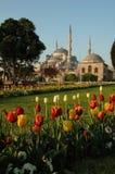 голубые тюльпаны мечети Стоковые Фото