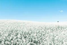 голубые холодные бесконечные тоны полей белые Стоковое фото RF