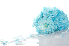 голубые хризантемы стоковая фотография rf