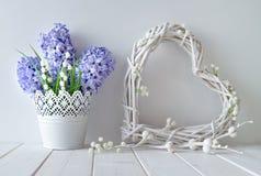 Голубые цветки гиацинта и ландыша с белым wattl Стоковое Фото