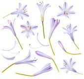 Голубые цветки и части изолированные на белой предпосылке Стоковые Изображения RF