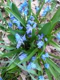 голубые яркие цветки стоковое изображение
