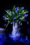 голубые snowdrops Стоковая Фотография