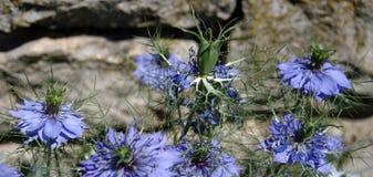 Голубые wildflowers перед желтоватой каменной стеной стоковые фото