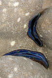 голубым врезанный кораллом выровнянный scallop рифа стоковые изображения