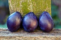 3 голубых зрелых сливы на деревянной доске Стоковые Фото