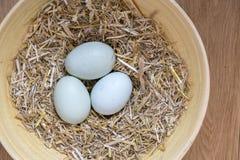 3 голубых органических яичка Стоковое Изображение