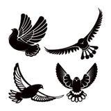 Голубь или голубь, белое летание птицы с распространенными крылами в небе или комплект усаживания иллюстрация штока