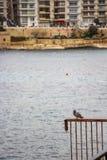 Голубь на перилах на переднем плане, залив Balluta на заднем плане, на ` s St Julain, Мальта стоковая фотография