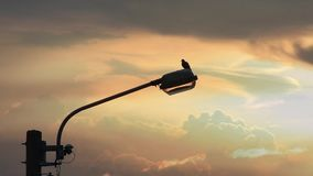Голубь на свете захода солнца уличного освещения и предпосылки отраженном с облаками двигая быстро через небо видеоматериал