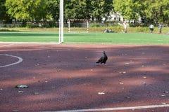 Голубь, птица на спортивной площадке ` s детей Стоковое Изображение RF