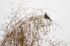 Голубь сидит на дереве стоковое фото rf