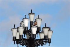 Голубь сидит на милом уличном фонаре стоковые изображения rf
