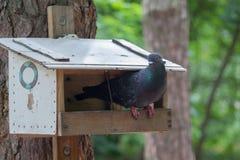 Голубь сидит на фидере птицы в парке Стоковое Фото