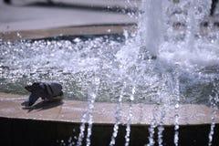 Голубь фонтаном на яркий солнечный день Стоковое Изображение