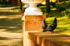 2 голубя в парке города Стоковые Фотографии RF