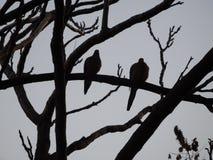 2 голубя в силуэте Стоковые Фотографии RF