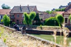 2 голубя играют на бетонной стене, загородке Стоковые Изображения RF